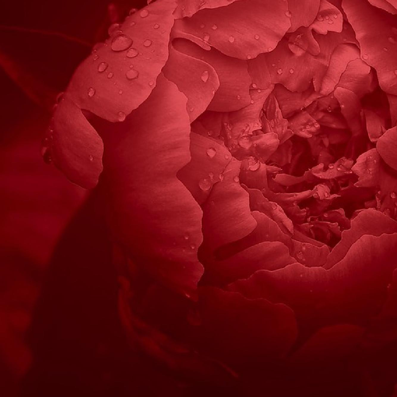 Awaken The Heart Through Chanting & Mantras | Carrie Grossman