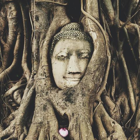 Meditation practice: Sympathetic Joy