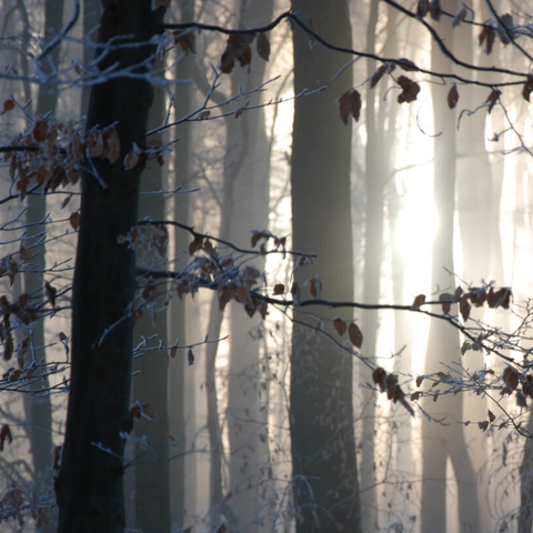 Meditation practice: Mystical Meditation