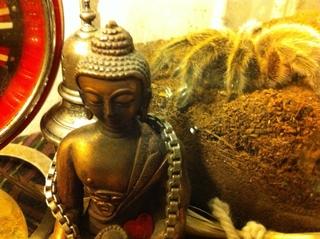 Meditation name: Crisp, Wakeful, Binaural Shikantaza with Guidance from Koans of Addiction
