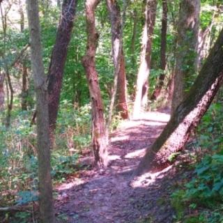 Meditation name: Walk & Wonder in the Woods