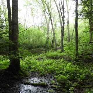 Meditation name: Peaceful Forest Rain Fall