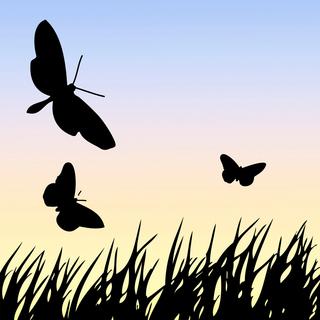 Meditation name: For Children: Fly like a Bird