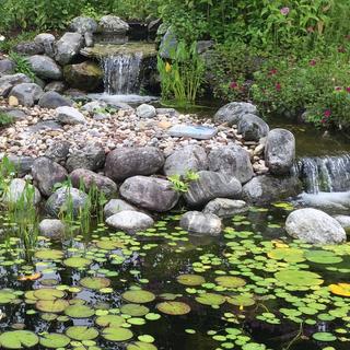 Meditation name: Sleep Meditation Near Frog Pond