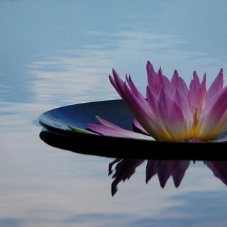 Meditation name: Meermeditatie