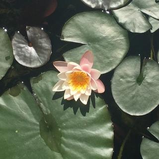 Meditation name: Beden taraması meditasyonu (MBSR)