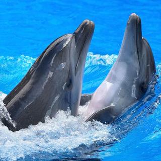 Meditation name: Dolphin Bliss Guided Meditation