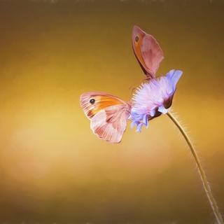 Meditation name: Flight of Love Kirtan