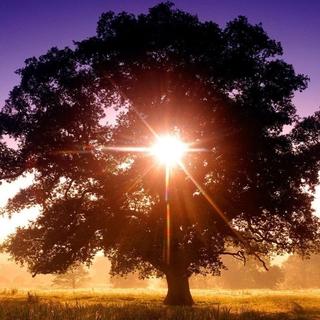 Meditation name: El árbol de la vida