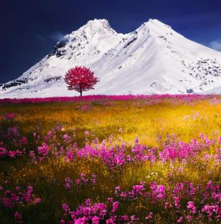 Meditation name: Magical Healing Meadow Guided Meditation