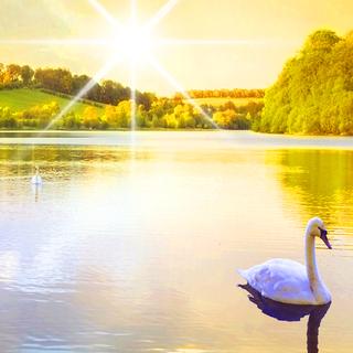 Meditation name: Simple Meditation on Simplicity