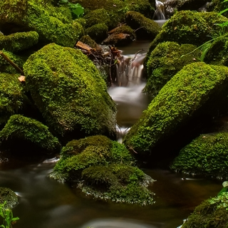 Meditation name: Nature Sounds: Woodland Stream