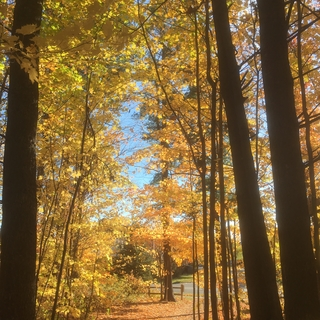 Meditation name: An Autumn Walk in Eastern Canada