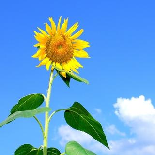 Meditation name: Children's Sunshine Meditation