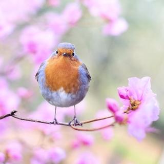 Meditation name: Kısa Nefes Farkındalığı Meditasyonu