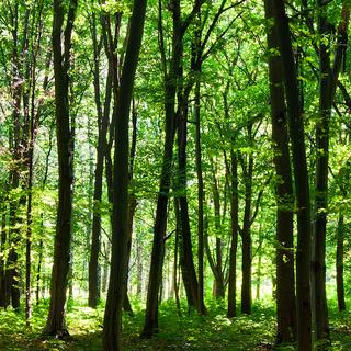 Meditation name: The Forest Speaks Guided Meditation