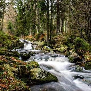 Meditation name: Forest Creek
