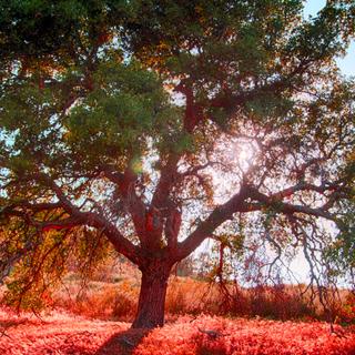 Meditation name: Grounding Tree Meditation