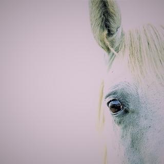 Meditation name: Pegasus Perspective Meditation