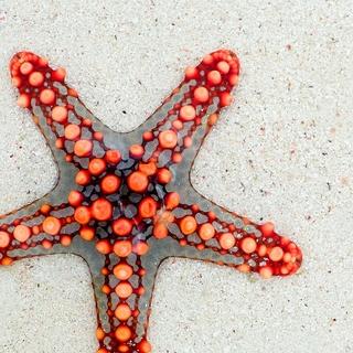 Meditation name: Starfish Meditation for Children