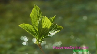 Meditation name: Invite Peace & Calmness