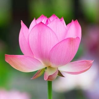 Meditation name: Yoga Nidra for Healing & Divine Sleep