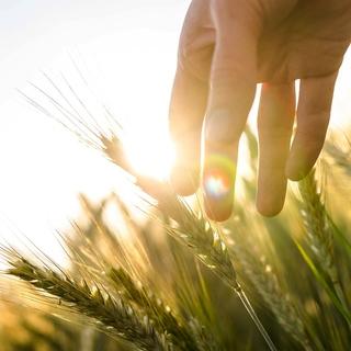 Meditation name: Bon dia! Meditació per els matins