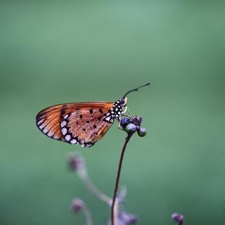Meditation name: Butterfly Meditation