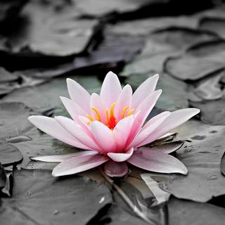 Meditation name: Pond of Peace