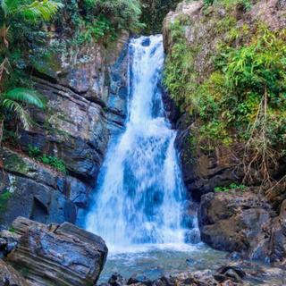 Meditation name: Rainforest Creek