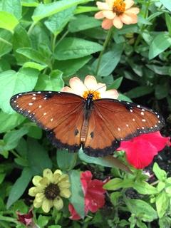 Meditation name: Expanding Care: A Lovngkindness Meditation