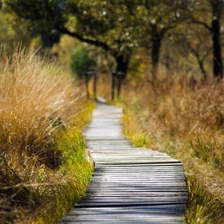 Meditation name: Meditazione Camminata