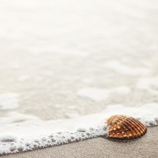 Meditation name: Mindfulness Of The Mind