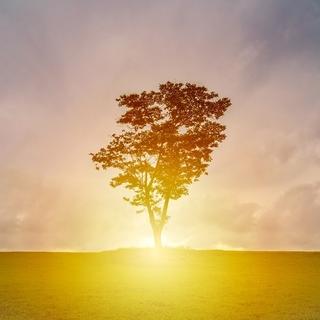 Meditation name: Nurturing Beginnings
