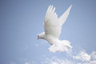 Meditation name: Progressive Relaxation: Wisdom of Birds