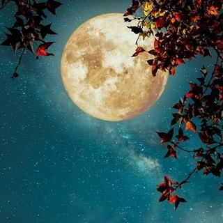 Meditation name: Full Moon Yoga Nidra