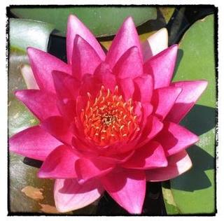 Meditation name: Yoga Nidra zur Stärkung des Urvertrauens