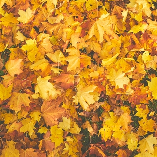 Meditation name: Not All The Leaves Are Falling