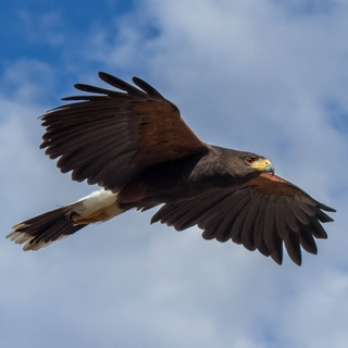 Meditation name: The Ultimate Viewpoint: Perception of the Hawk