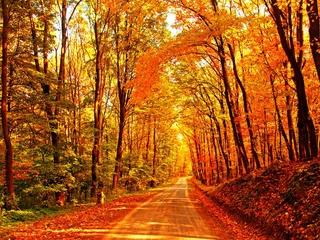 Meditation name: Autumn Equinox Meditation