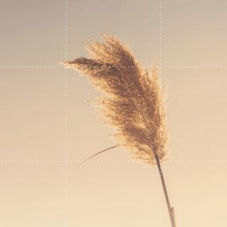 Meditation name: Pause og Frihed - Lidt Længere Pause