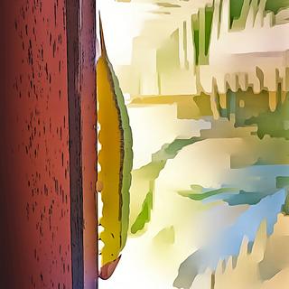 Meditation name: A Lagarta na Janela - Sobre Confiança na Vida | Podcast Autoconsciente
