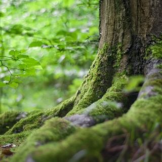 Meditation name: Embrasser l'arbre