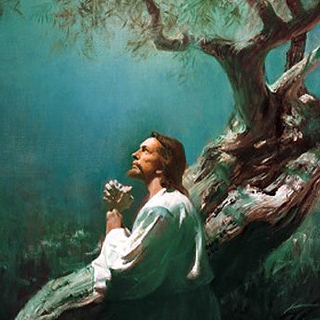 Meditation name: Guided Practice: Jesus And The Olive Trees