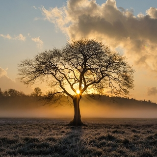 Meditation name: Musicoterapia guiada: Encontrando la Luz