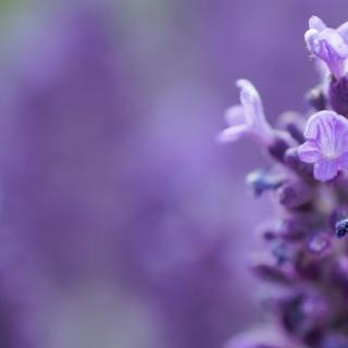 Meditation name: Lavender Self Love Practice