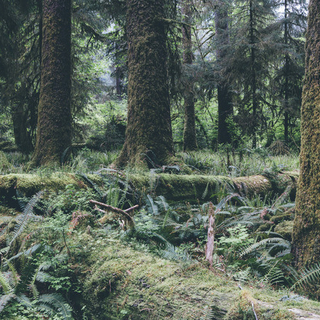Meditation name: Grounding Into the Earth: Root & Sacral Chakra Meditation