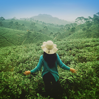 Meditation name: Green Tea: Relaxing Music