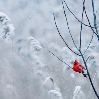 Meditation name: Christmas Calm