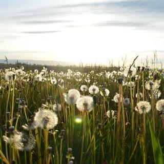 Meditation name: Loving Kindness Practice